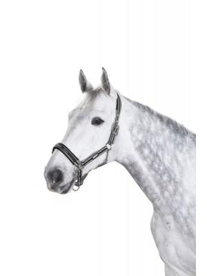 ESKADRON, Kantar PIN BUCKLE BASICS, ANTHRA/WHITE/BLACK
